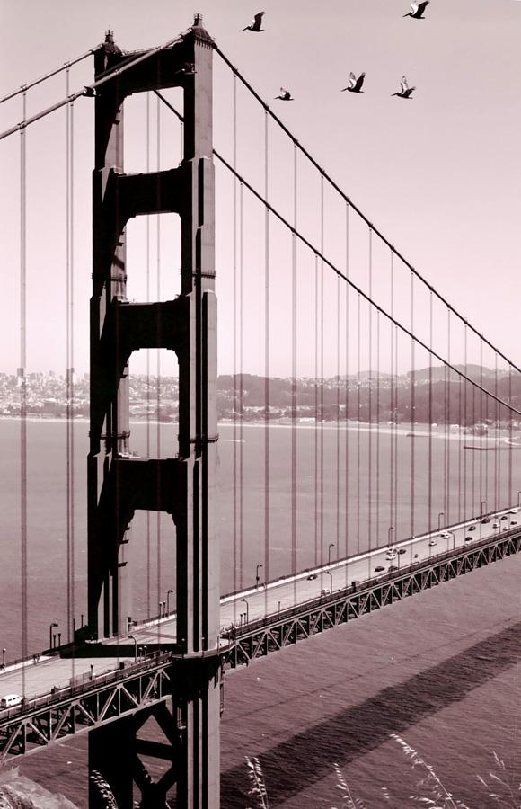 Golden Gate Pelicans